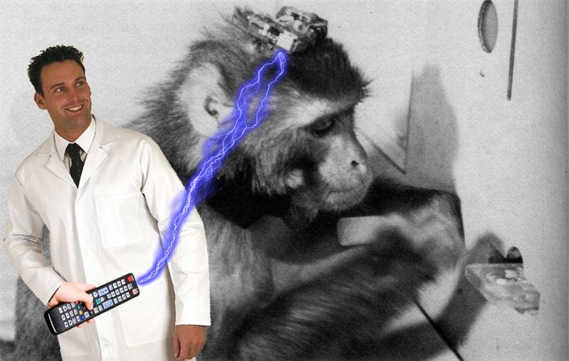 2017-12-08-monkey-zap